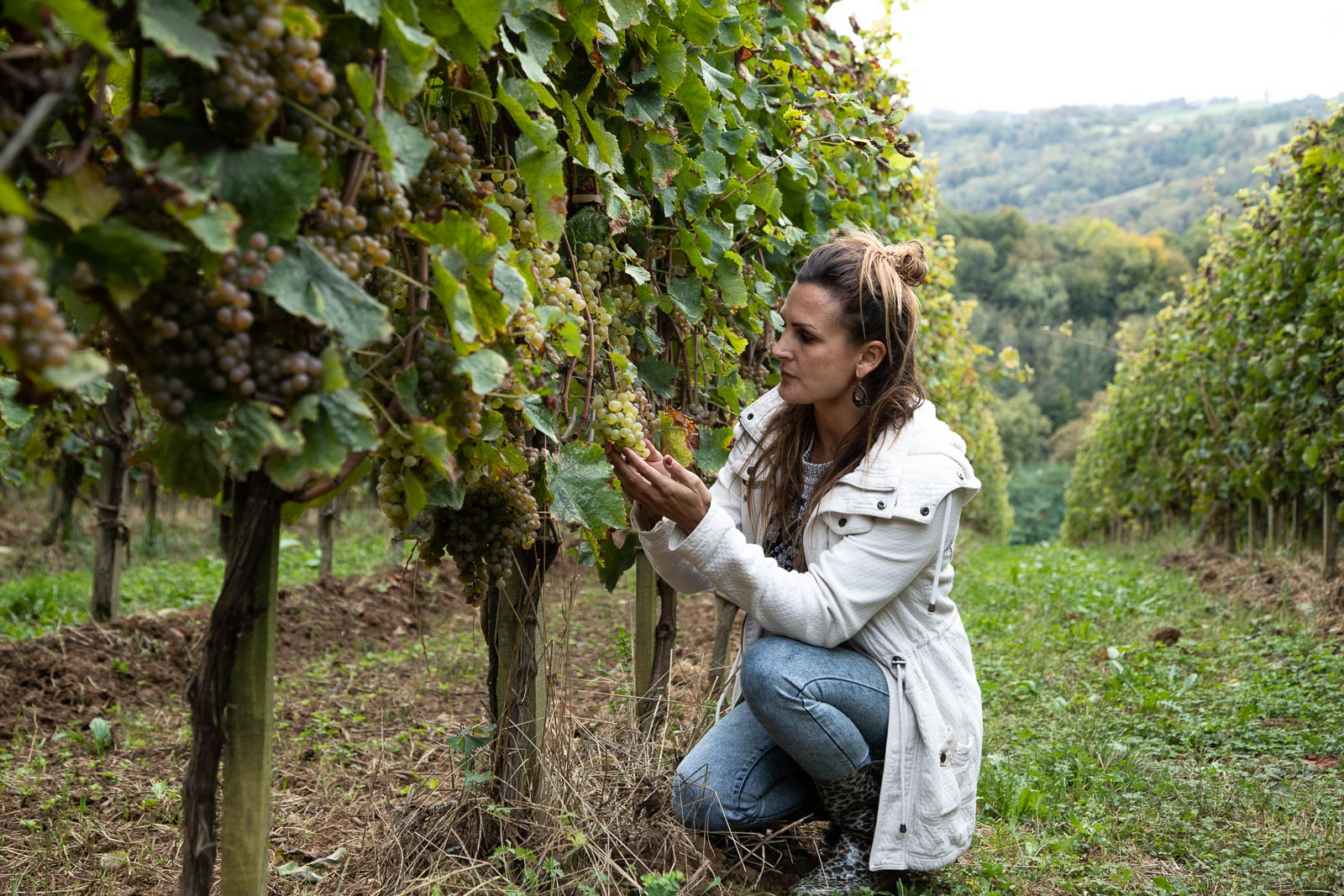 Vignoble et Vins du Jurançon