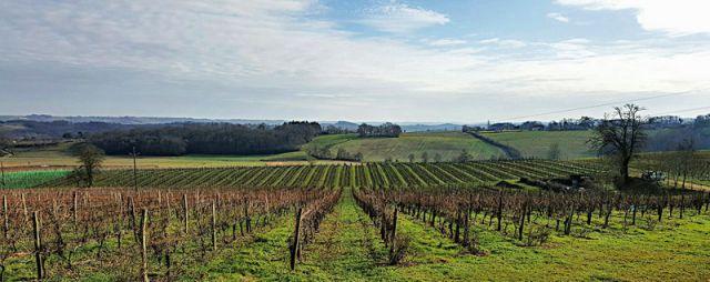Vignobles du Béarn